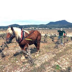 Labour des vignes au Mas de Boissonnade