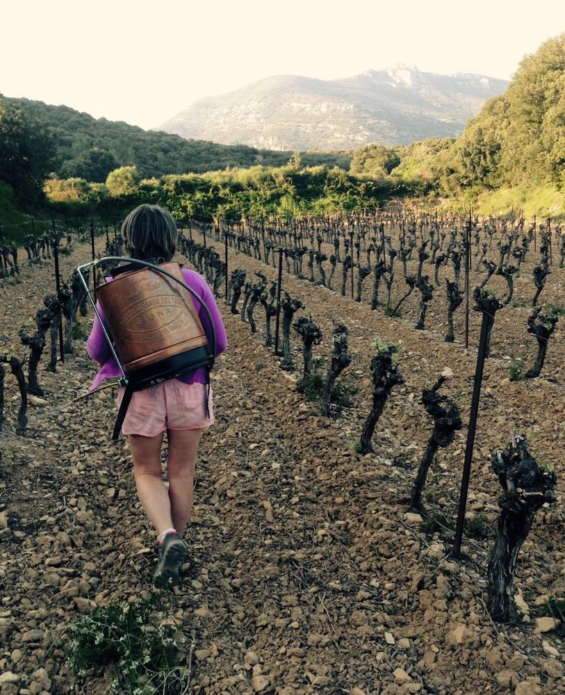 Pulvérisation vignes mas de Boissonnade