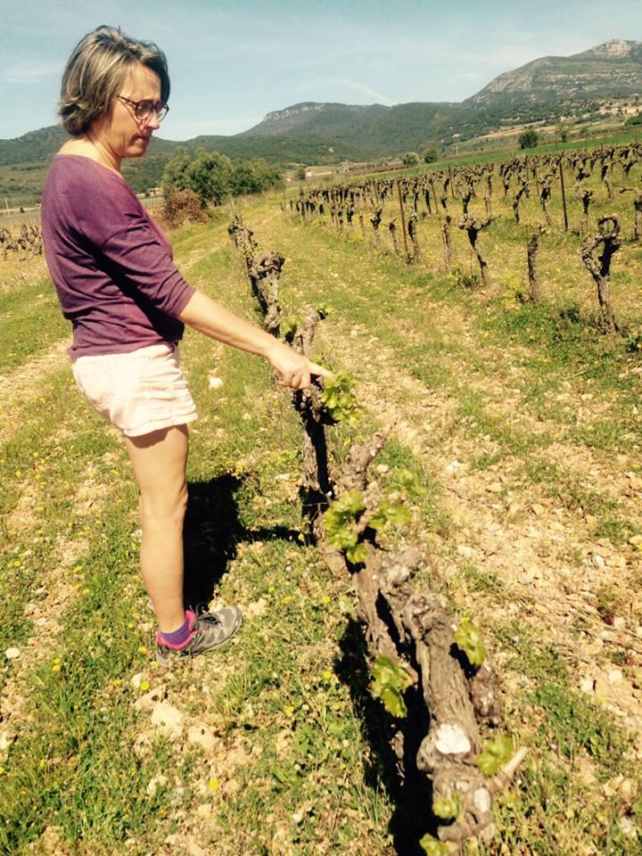travail à la vigne Mas de Boissonnade