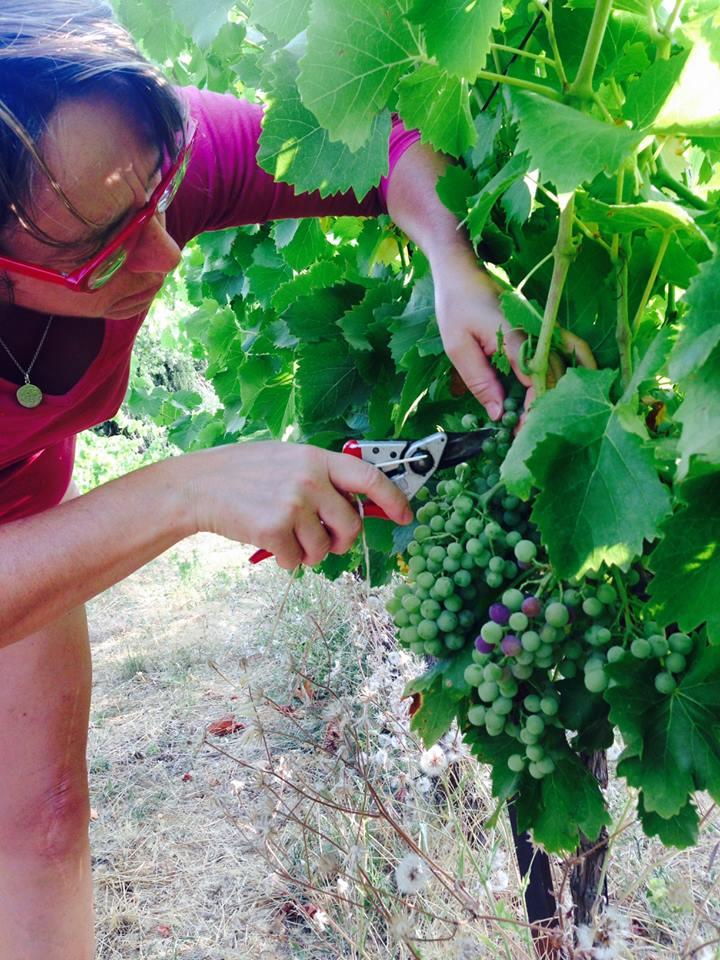 travail à la vigne au Mas de Boissonnade