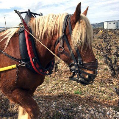 Labour au cheval au Mas de Boissonnade
